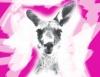 Die Känguru-Chroniken. Das Theaterstück