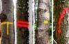 Markierungen an Bäumen