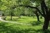 Schnittkurs für veredelte Streuobstbäume
