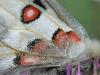 Schmetterlinge – In Realität und Imagination