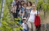 Wandern auf dem Esslinger Weinerlebnisweg