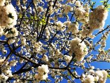 Der Frühling ist da..._10