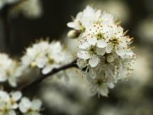 Der Frühling ist da..._27
