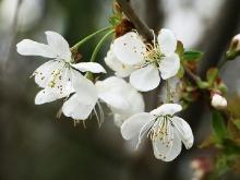 Der Frühling ist da..._28
