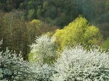 Der Frühling ist da..._30