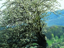 Der Frühling ist da..._31