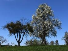 Der Frühling ist da..._4