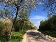 Der Frühling ist da..._7