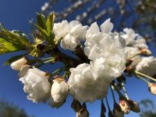Der Frühling ist da..._8