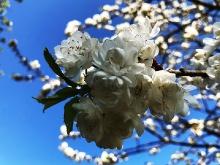 Der Frühling ist da..._9